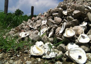 Beyond rivers, Midwestern floodwaters hurt Gulf seafood catches