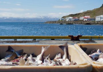 Scottish sustainable seafood restaurants join Save the Sea campaign to shield the sector's oceans