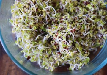 Researchers verify mixed remedy to sanitize natural sprouts
