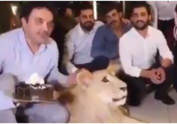 Man smashes cake in pet lion's face. Twitter asks who is the real animal